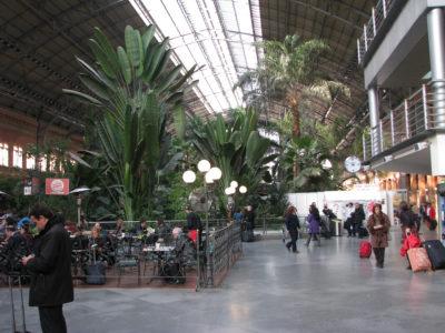 Amazing indoors: Atocha train station, Madrid