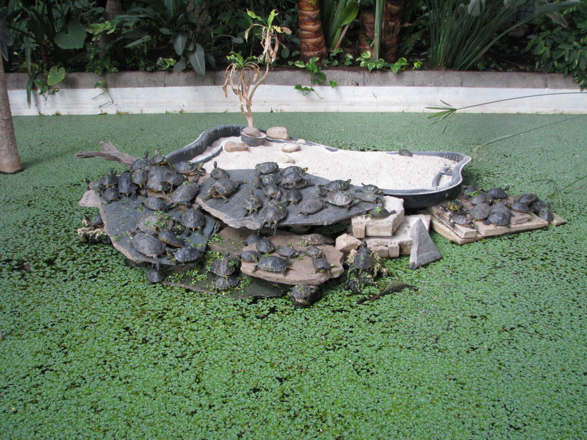 Turtles in the pond at Atocha station